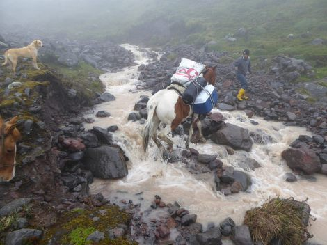 Horses crossing a mountain creek on the way to the base Camp, Chimborazo North